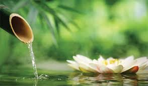meditacion flor